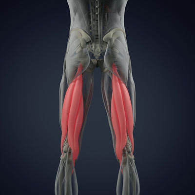The Posterior Chain – 5 Tips To Grow Your Hamstrings